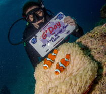 Everyone wants to find nemo - we can show you where he lives!