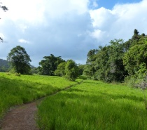 Walking trail at Daintree Valley Haven