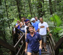 Guided Rainforest Boardwalk