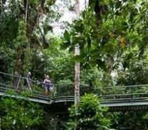 Mossman Gorge Boardwalk