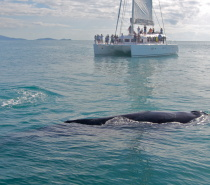 Humpback Whales seen by Aquarius guests