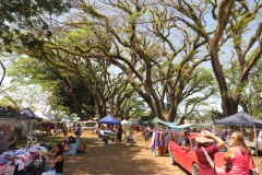 Mossman Markets - held every Saturday