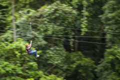 The most exciting way to see the Daintree