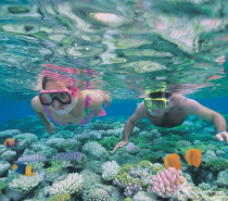 Snorkellers at Agincourt Reef