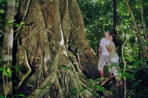 Your day with Daintree Tours includes:
