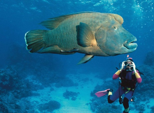 PADI COURSES PORT DOUGLAS