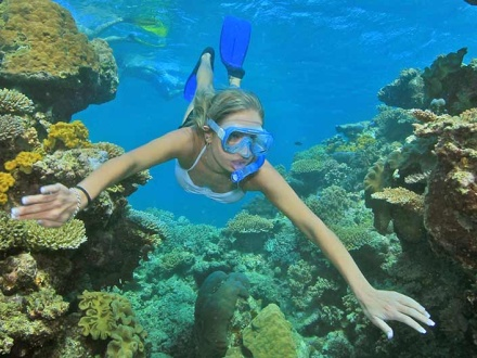 Daintree Tours and Snorkel & Dive Package