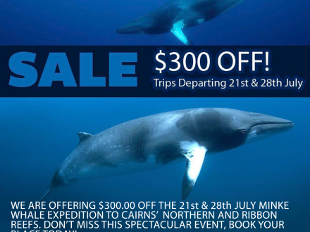 Minke Whale and Ribbon Reef Special - 21st and 28th July 2017