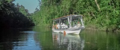 Our 3 hour Daintree river cruise with return transport